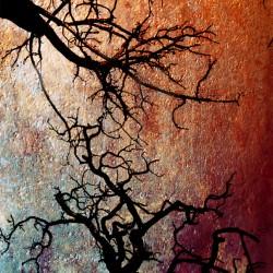 crazytrees